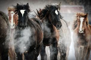 走る馬の写真素材 [FYI03054860]