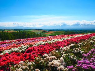 北海道の夏の写真素材 [FYI03054894]