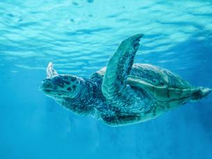海亀の写真素材 [FYI03054957]