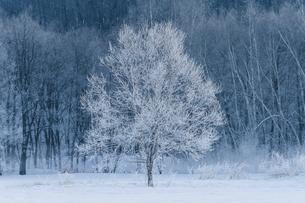 冬の北海道の写真素材 [FYI03054958]
