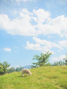 羊のいる風景の写真素材 [FYI03055046]