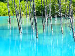 青い池の写真素材 [FYI03055081]