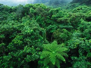 石垣島の自然の写真素材 [FYI03055082]