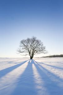 冬の北海道の写真素材 [FYI03055092]