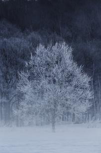 冬の風景の写真素材 [FYI03055126]