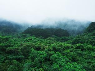 石垣島の自然の写真素材 [FYI03055145]
