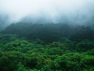 石垣島の自然の写真素材 [FYI03055150]