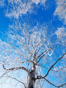 樹氷と青空の写真素材 [FYI03055225]
