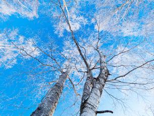 樹氷と青空の写真素材 [FYI03055226]