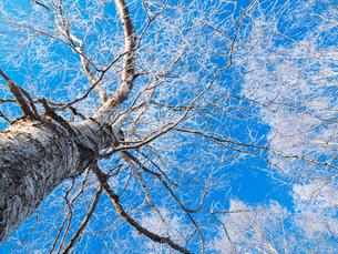 樹氷と青空の写真素材 [FYI03055228]