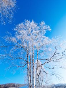 樹氷と青空の写真素材 [FYI03055229]
