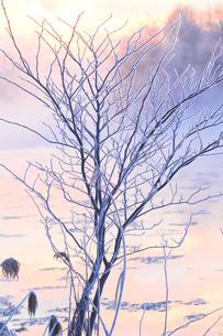 冬の風景の写真素材 [FYI03055234]