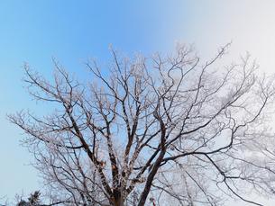 冬の風景の写真素材 [FYI03055249]