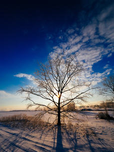 冬の風景の写真素材 [FYI03055256]