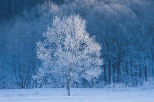 樹氷の写真素材 [FYI03055266]