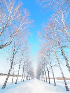 冬の道の写真素材 [FYI03055273]