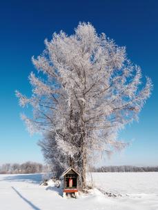 樹氷の写真素材 [FYI03055295]