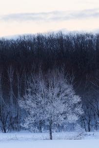 冬の風景の写真素材 [FYI03055380]