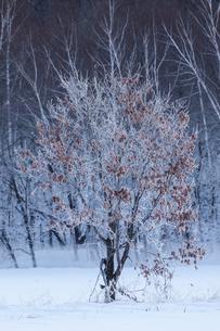 冬の風景の写真素材 [FYI03055384]