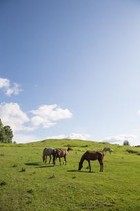 北海道の馬の写真素材 [FYI03055420]