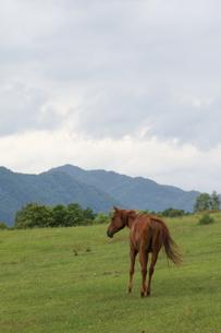 北海道の馬の写真素材 [FYI03055424]