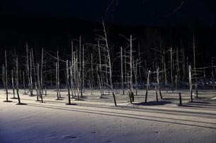 冬の枯れ木の写真素材 [FYI03055484]