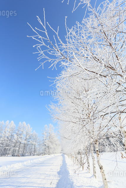 北海道の冬道の写真素材 [FYI03055570]