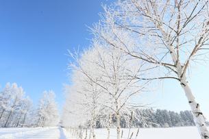 北海道の冬道の写真素材 [FYI03055572]