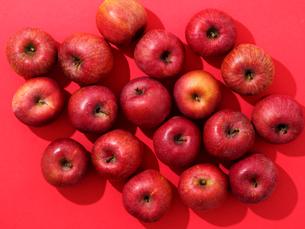 りんごの写真素材 [FYI03055663]