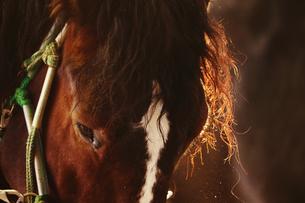 冬の牧場の写真素材 [FYI03055706]
