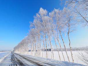 樹氷と青空の写真素材 [FYI03055708]