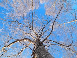 樹氷の写真素材 [FYI03055725]
