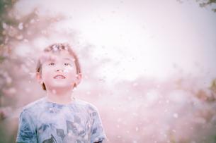 桜の写真素材 [FYI03055759]