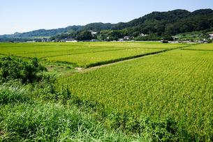 実った稲穂のある風景の写真素材 [FYI03055859]