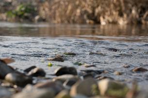 川の写真素材 [FYI03055879]