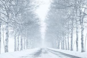 北海道の冬道の写真素材 [FYI03056027]