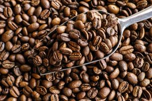 コーヒー豆の写真素材 [FYI03056050]