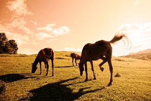 牧場の馬の写真素材 [FYI03056057]