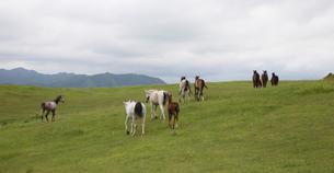 北海道の馬の写真素材 [FYI03056096]