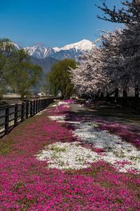 春爛漫の安曇野の写真素材 [FYI03056200]