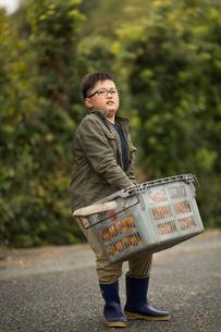 みかん畑と子供の写真素材 [FYI03056213]