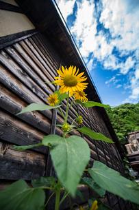 夏の花の写真素材 [FYI03056310]