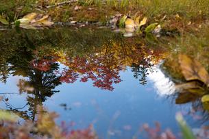 水面に映る紅葉の写真素材 [FYI03056337]