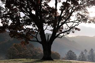 朝陽射し込む高原の写真素材 [FYI03056354]