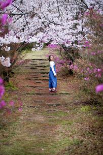 桜のころの写真素材 [FYI03056361]
