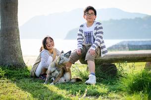 柴犬と散歩の写真素材 [FYI03056364]