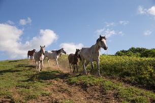 放牧地を走る馬の写真素材 [FYI03056750]