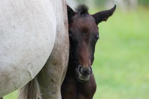 牧場の馬の写真素材 [FYI03056752]