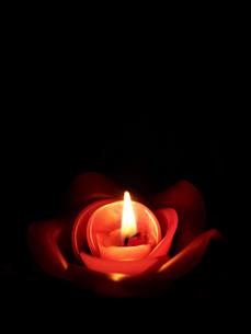 バラのロウソクの写真素材 [FYI03056776]