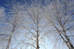 北海道の冬の写真素材 [FYI03056793]